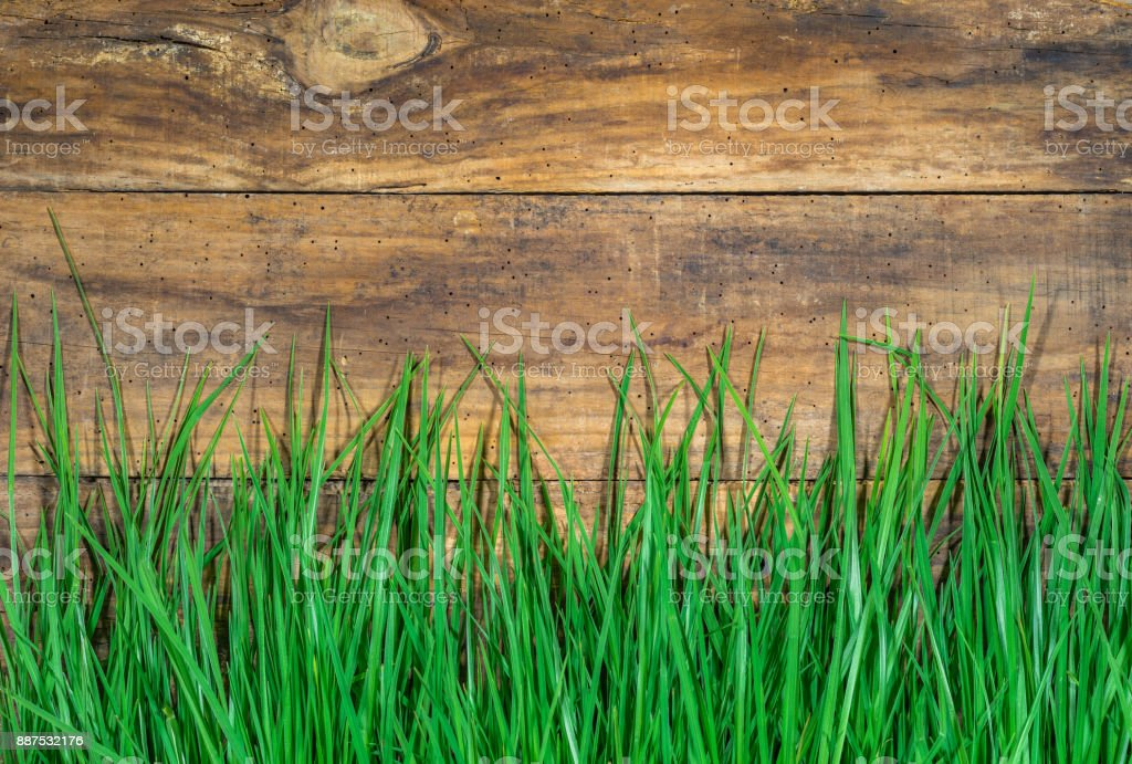 Green grass on rustic wooden background stock photo