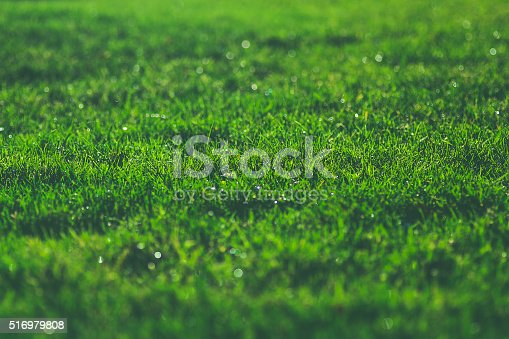 istock Green grass on sunny meadow morning sparkling dew water drops 516979808