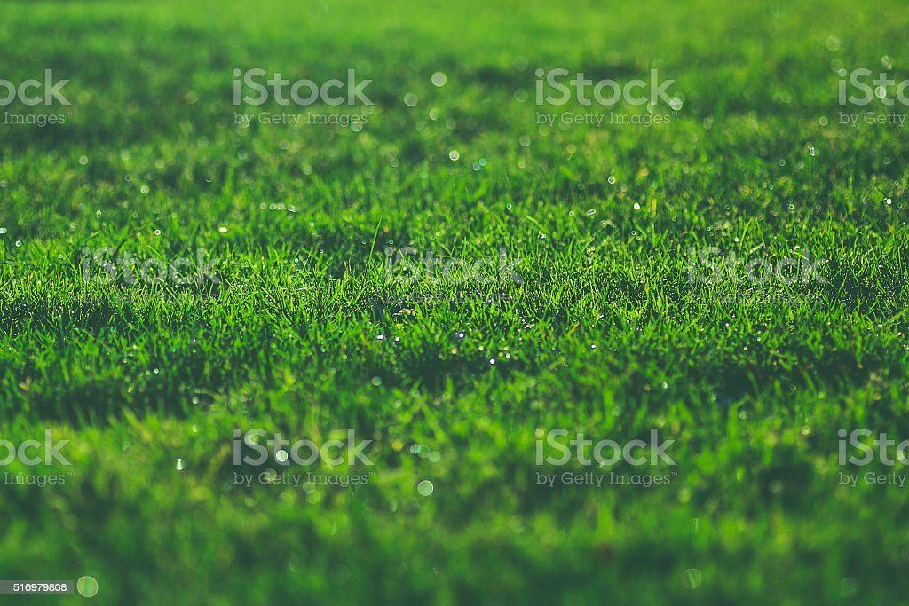 Césped verde en prado soleado resplandeciente agua gotas de rocío de la mañana - foto de stock