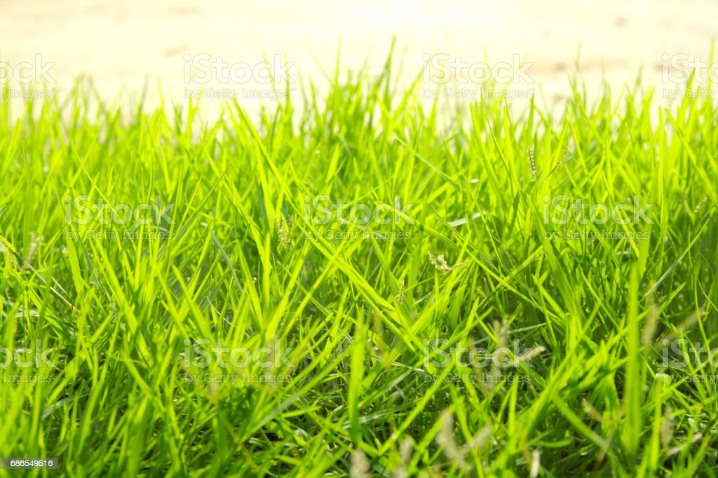 Green grass on the ground. royalty-free stock photo