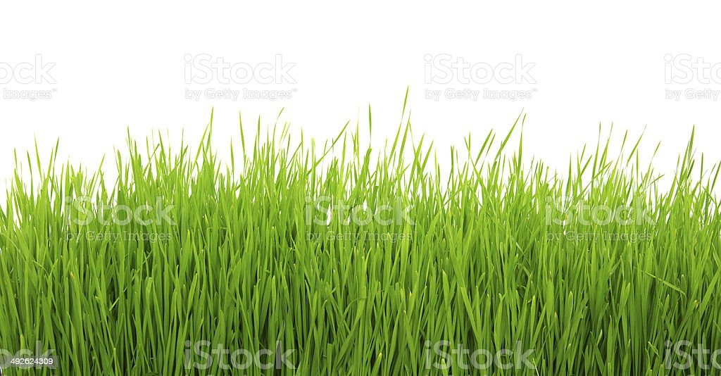 Green grass on white background royalty-free stock photo