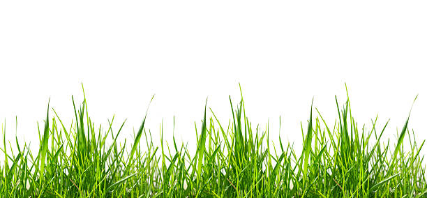 Green grass pattern (large) isolated on white background stock photo