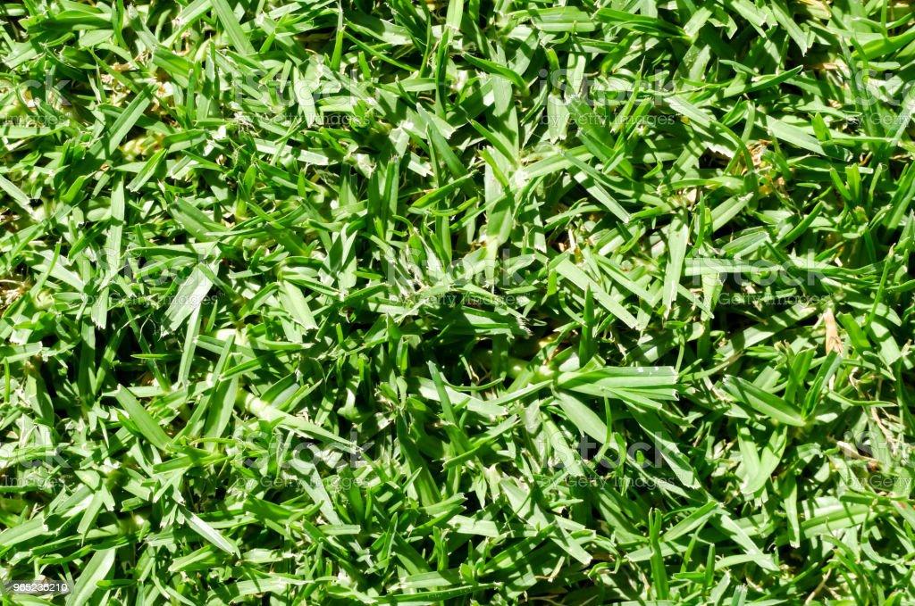 Green Grass Pattern Texture zbiór zdjęć royalty-free