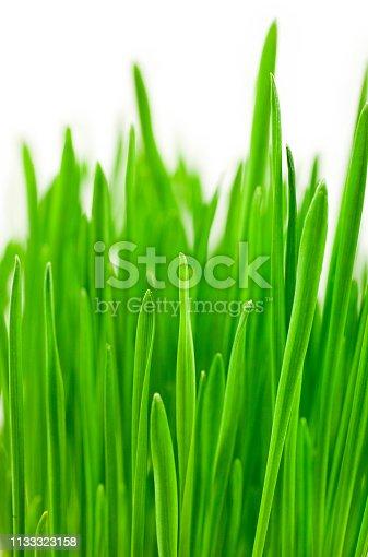 istock Green grass 1133323158