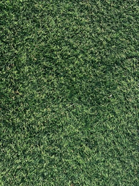 Grünes Gras – Foto