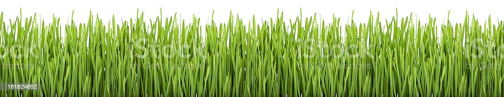 Green Grass (XXXL) stock photo
