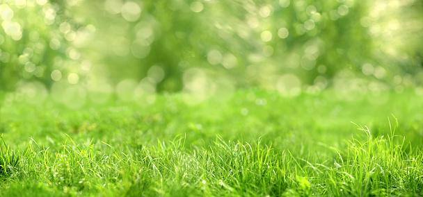 close up shot of green grass.