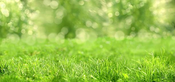 green gras - vorgarten landschaftsbau stock-fotos und bilder
