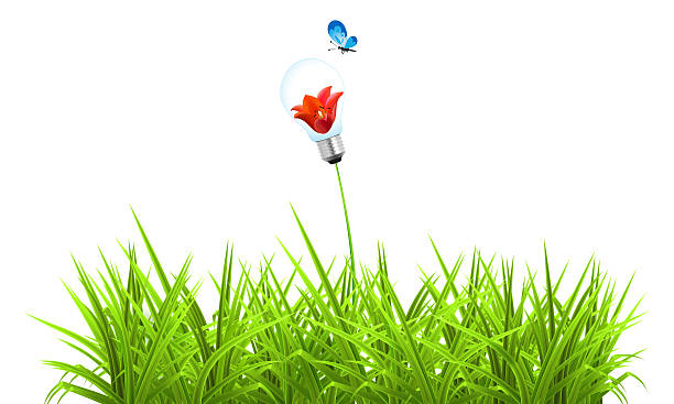 Green grass picture id185423151?b=1&k=6&m=185423151&s=612x612&w=0&h=oh1bglsiqwaf7gyv65pmycpq2wskp2oy5wubxf2ajqe=
