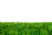 Artificial Turf in Front of White Background. Focused on Middle of Grass.