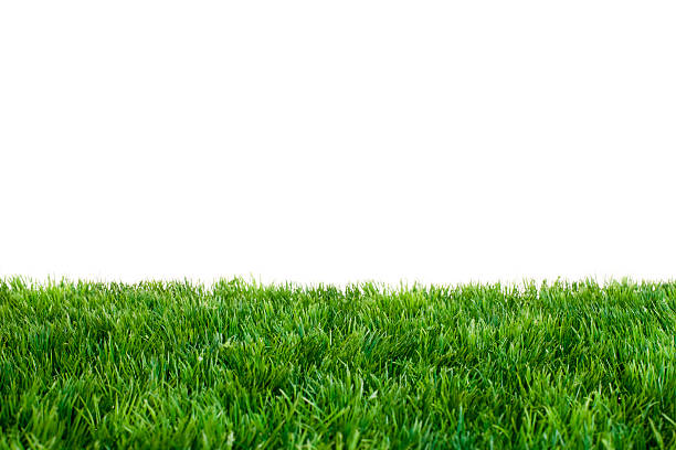 Green Grass Artificial Turf in Front of White Background. Focused on Middle of Grass. turf stock pictures, royalty-free photos & images