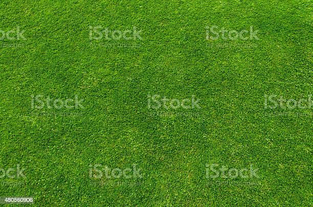 Green grass picture id480560906?b=1&k=6&m=480560906&s=612x612&h=okq2mfx2qs5kfzhcvskqry7bs9e8sylj 3jgp6lkndk=