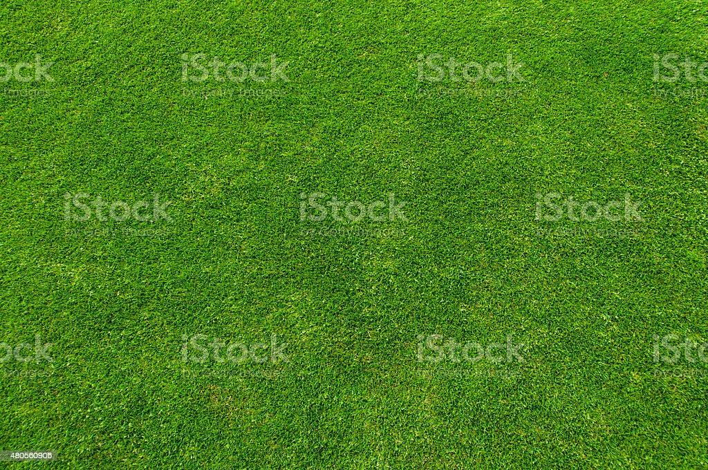 Gramado verde - foto de acervo