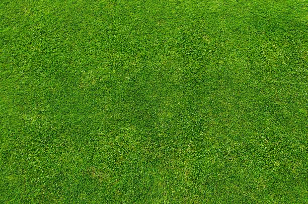 green grass - high angle view stock pictures, royalty-free photos & images