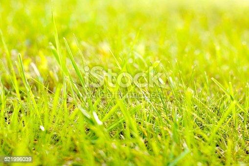 istock green grass 521996039