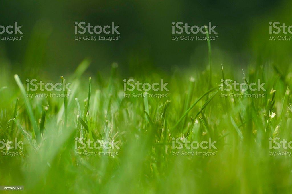 Green Gras Lizenzfreies stock-foto