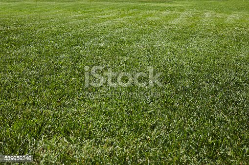 474672896 istock photo Green Grass 539656246