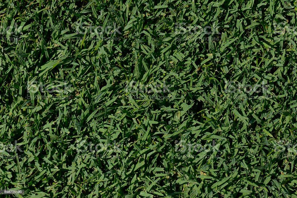 Gramado verde  foto royalty-free