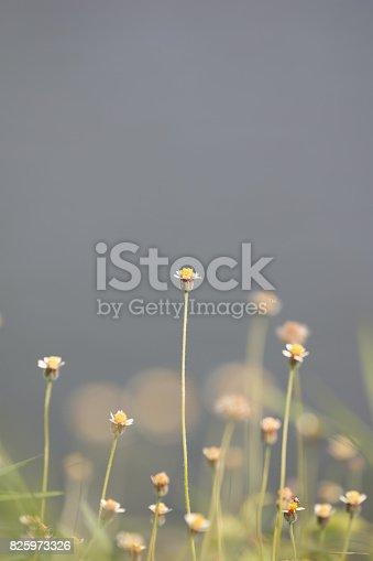 istock Green grass 825973326