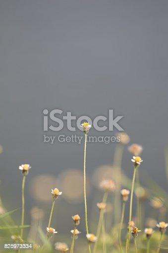 istock Green grass 825973334