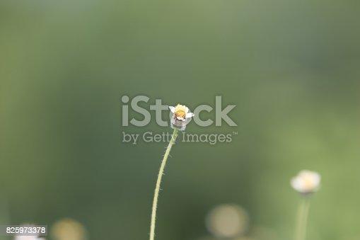 istock Green grass 825973378