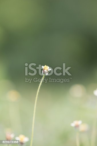 istock Green grass 825973388