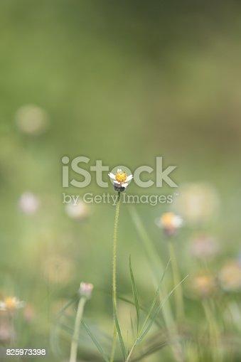 istock Green grass 825973398
