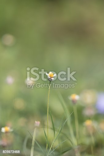 istock Green grass 825973468