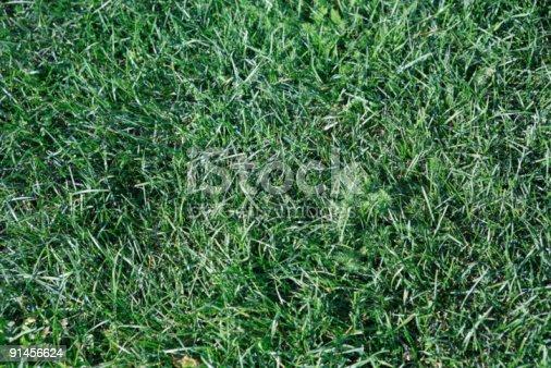 825397576 istock photo green grass 91456624