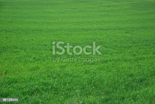Green Grass Stock Photo & More Pictures of Aerial View