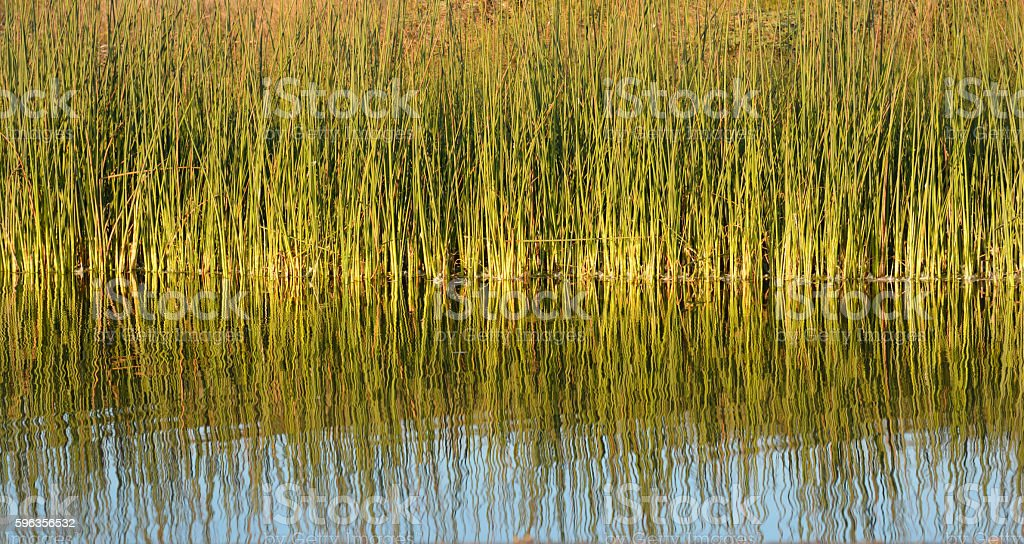 Green Grass Reflections royalty-free stock photo
