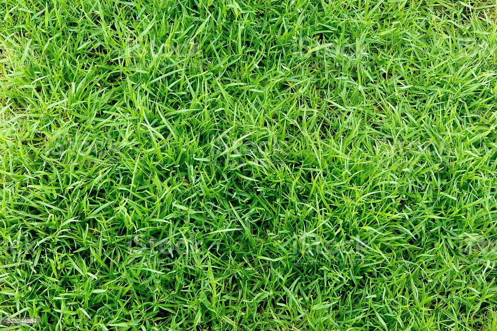 Fabulous trama di erba verde senza cuciture vista dallalto - Giardino senza erba ...