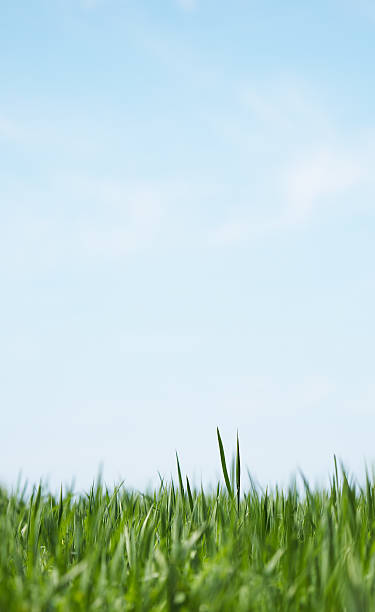 Green grass soft abstract background stock photo