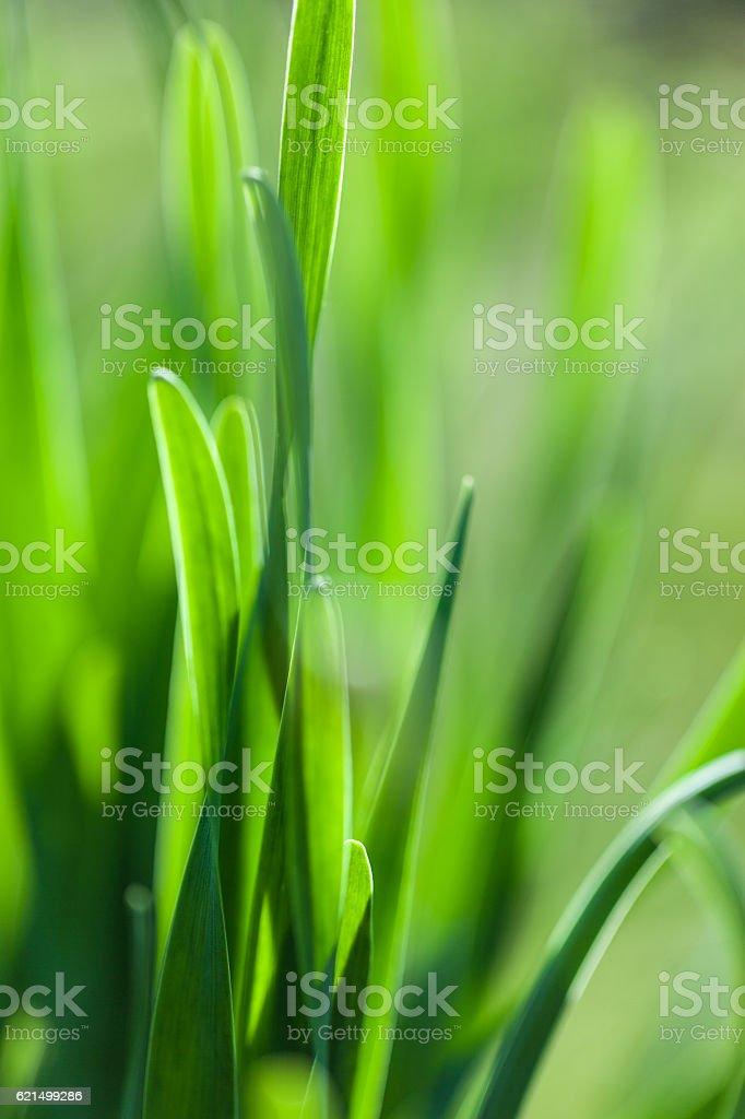 Erba verde macro soft focus foto. foto stock royalty-free