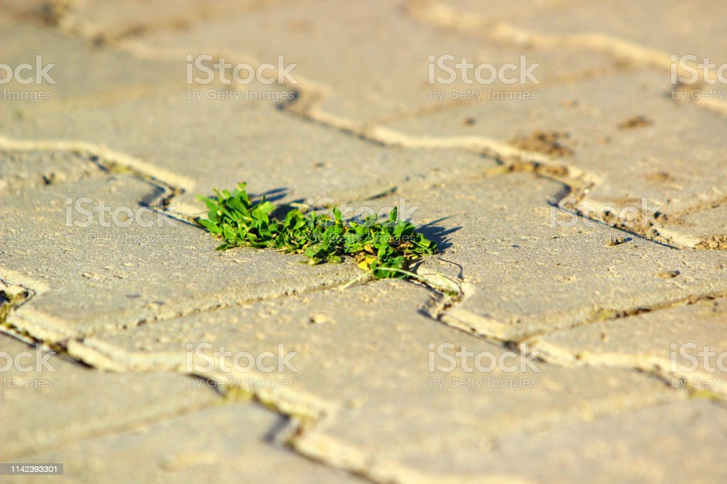 The concept of a growing plant in the sunset close-up. Selective...