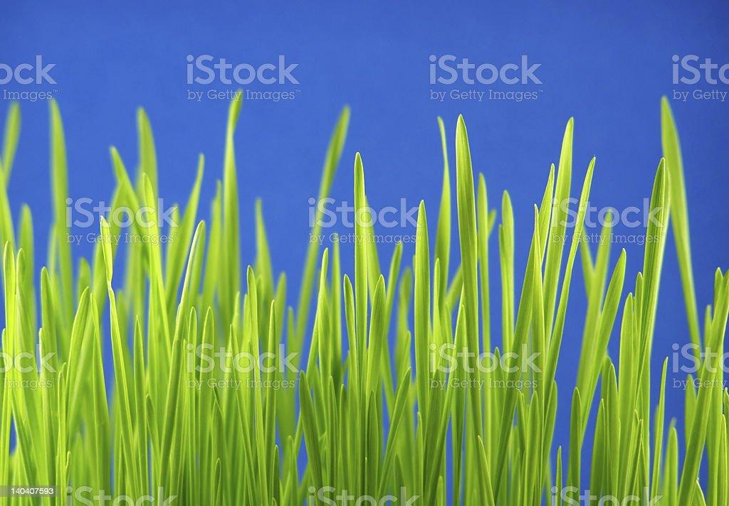 green grass straws royalty-free stock photo