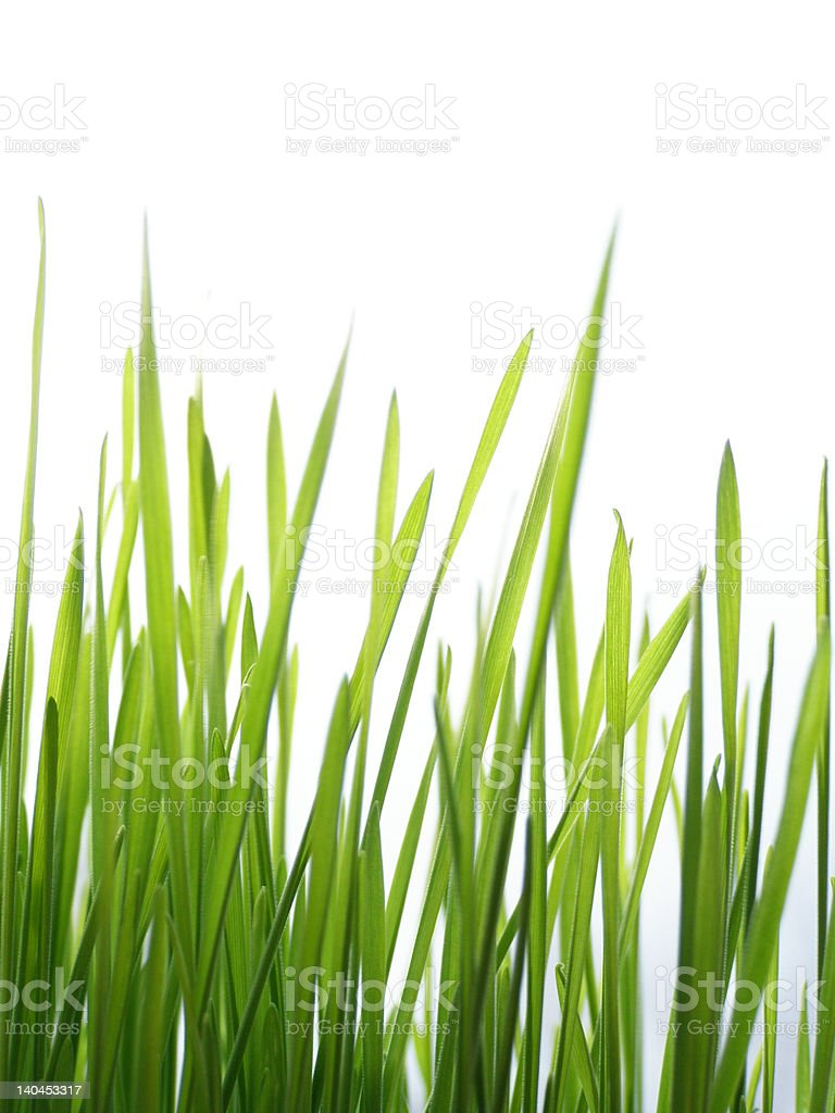 green grass straws royalty-free stock photo