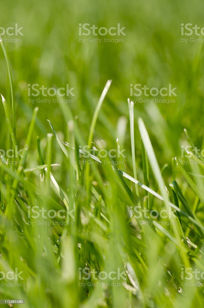 Green Grass Texture 2 royalty-free stock photo