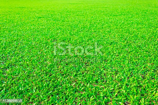 931661614 istock photo green grass texture background 1138999513