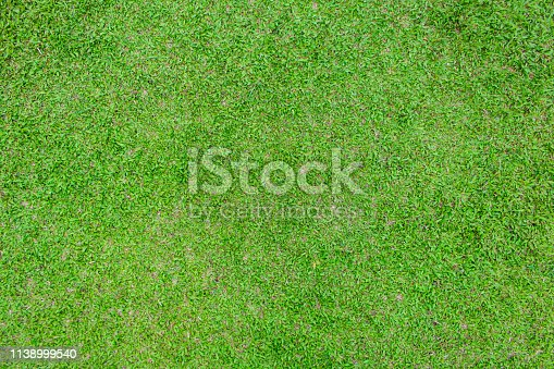 931661614 istock photo green grass texture background 1138999540