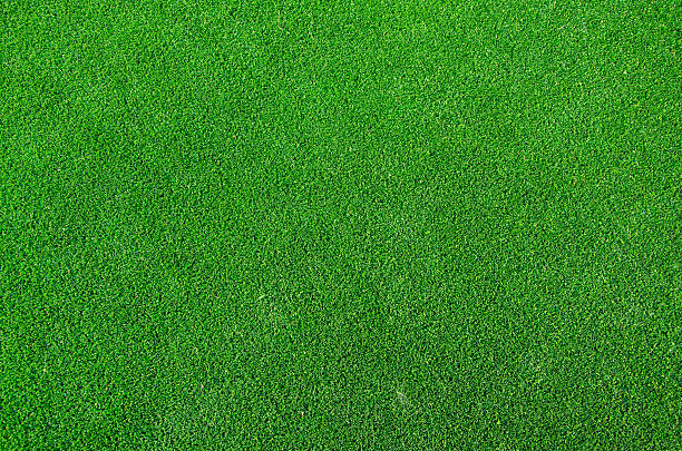 green grass texture background stock photo