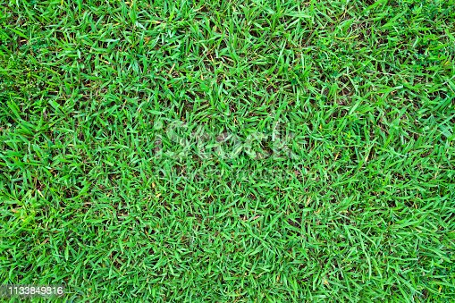 825397576 istock photo Green grass texture background. Top view 1133849816