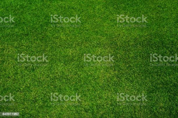 Green grass texture background top view picture id645911982?b=1&k=6&m=645911982&s=612x612&h=raathvalscp15gzvsxeyff sbtvpvjkf3zp0d6ljh 4=