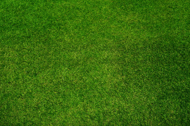 Green grass texture background, top view stock photo