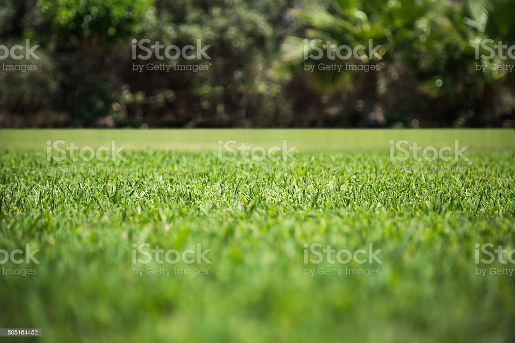 Green grass texture from a field stock photo