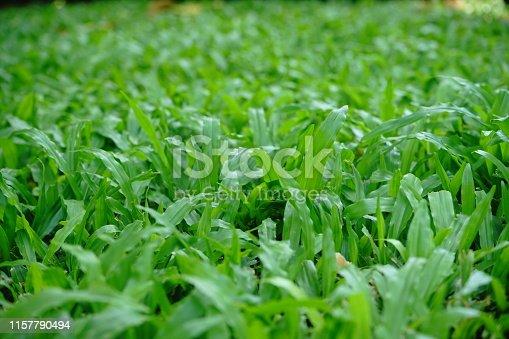 Thailand, Grass, Lawn, Rain, Blade of Grass, Drop