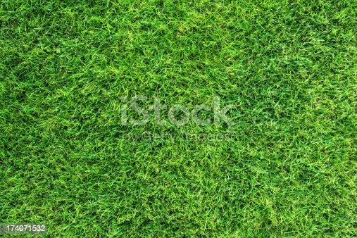 istock Green grass texture 174071532