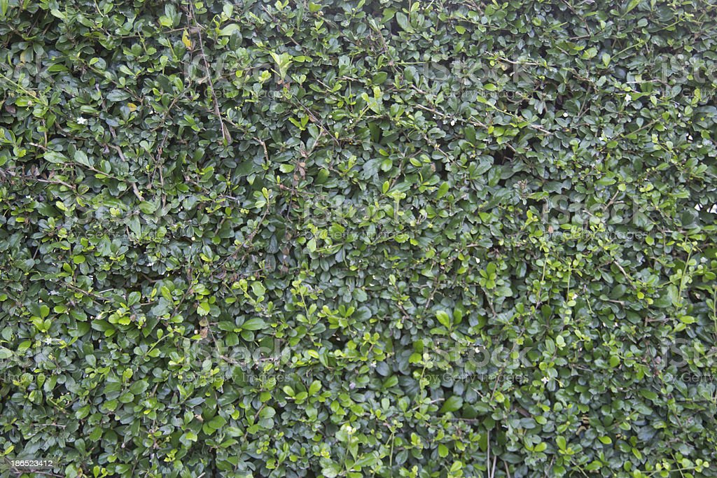 green grass texture royalty-free stock photo