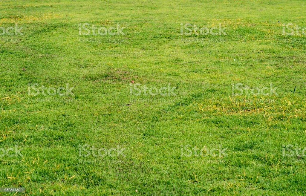 Grüne Gras Textur  Lizenzfreies stock-foto