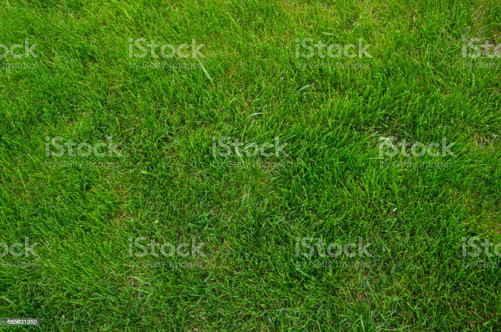 Green grass texture foto de stock royalty-free